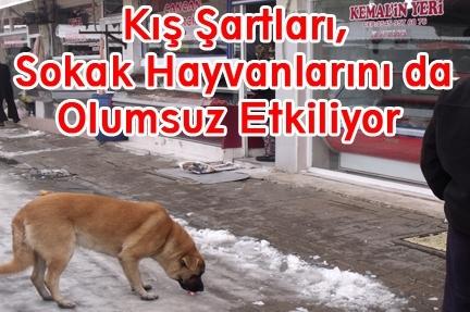 Soðuk kýþ günlerinde sokak hayvanlarýný unutmayalým